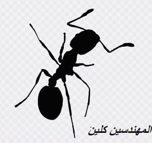 مكافحة النمل بجدة